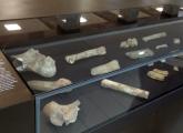 narodni muzej (7)